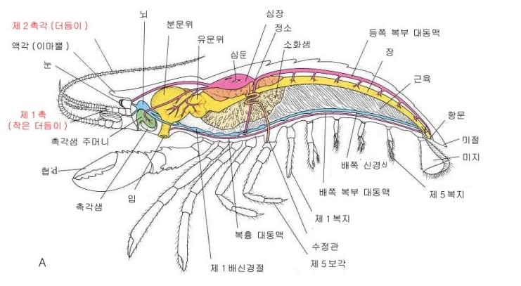 갑각아문에 대한 이미지 검색결과
